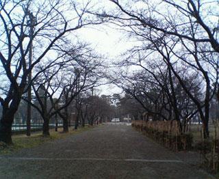 高田公園07.2.9.jpg