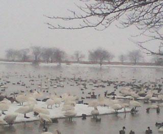 漂湖1.jpg