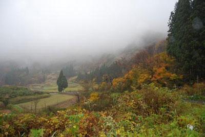 雨の紅葉1.jpg